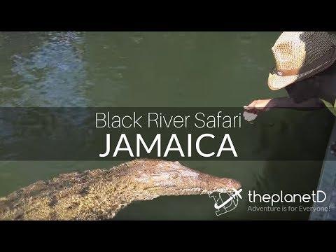Black River Safari - In search of the Wild Crocodile   Jamaica Travel Vlog