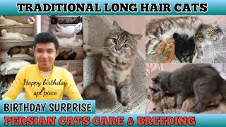Persian cats breeding | Tamil | kittens for sale | SPL PIECE BDAY | JACK OF ALL PETS #persiancat#cat