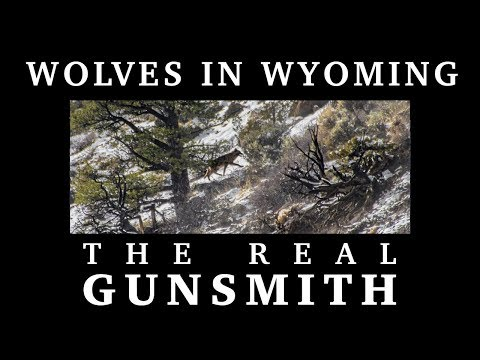 Wolves in Wyoming – The Real Gunsmith