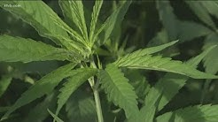 Idaho Senate passes bill to legalize hemp