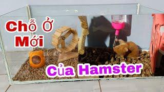 Review Cách Nuôi Chuột Hamster Mua Của Anh Tony TV
