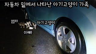 비오는날 자동차 밑에서 나타난 아기고양이