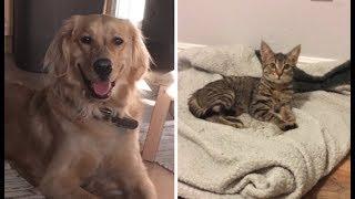 Парень пришёл домой и узнал, что его собака завела котёнка!