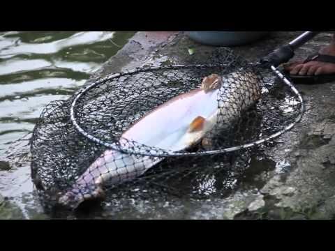 Fish On Patin JAKARTA FISHING CHALLENGE
