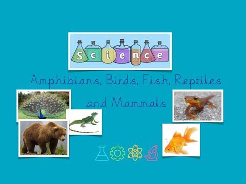Science   Amphibians, Bird, Fish, Reptiles & Mammals