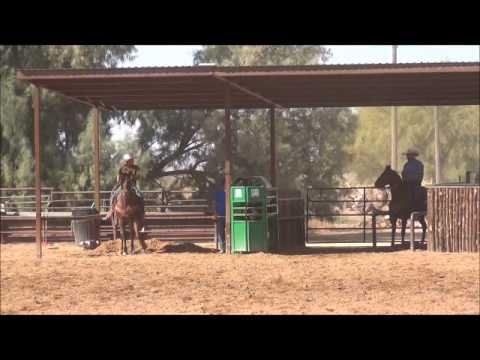 Bit - 14yo Sorrel Head & Heel Horse For Sale