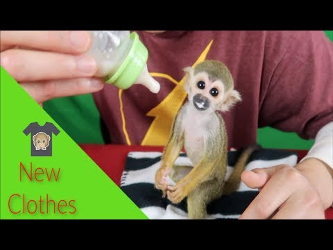 Baby Monkey oLLie tries out new cLothes (FUN TIME!)