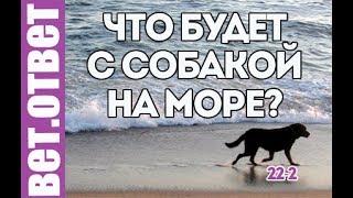 Морская соль для собаки, вредно?  ВетОтвет 22-2
