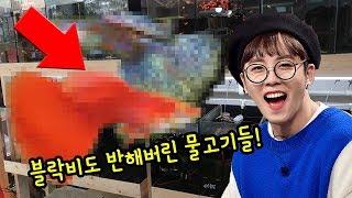 블락비 태일이가 준 물고기 구피 덕후 모여랏 청춘수족관