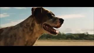 Troy (2004) | Full intro [Dog scene] | Achilles | subs