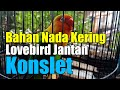 Lovebird Nada Kering Bahan Konslet  Mp3 - Mp4 Download