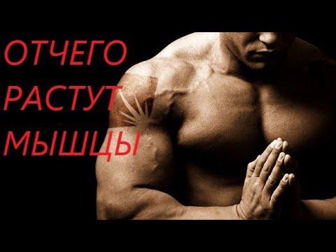 РОСТ МЫШЦ.4 ГЛАВНЫХ ФАКТОРА.     #мышцы#бодибилдинг#фитнес