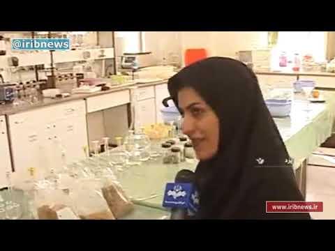 Iran Quinoa research & harvest, Yazd province پژوهش و برداشت كوينوآ استان يزد ايران