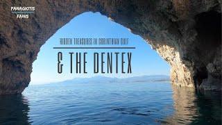 Kρυμμένοι θησαυροί τ Κορινθιακού Κόλπου & Συναγρίδες | Hidden Treasures in Corinthian Gulf & Dentex