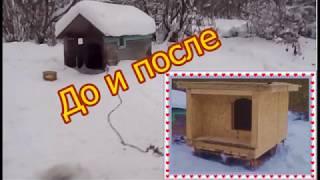 Строим зимнюю будку для собаки
