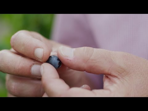 The Seeds of Life – Grapes (Ep #5) – New Holland Agriculture