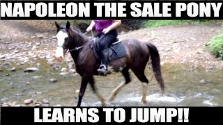 Napoleon The Sale Pony Learning To Jump! 9/30