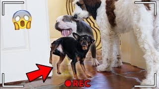 What do dogs do when they're home alone? *SHOCKING* Hidden Spy Camera!!
