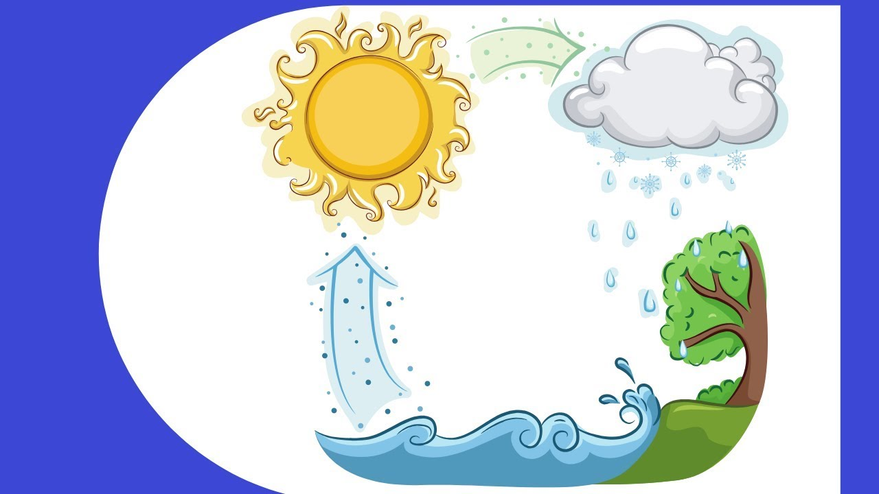 Water Cycle Steps Youtube