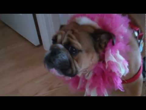 Bed And Breakfast Seattle - Sleeping Bulldog - The Bulldogs