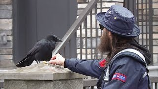 Canuck the crow has unlikely friendship with B.C. mail carrier