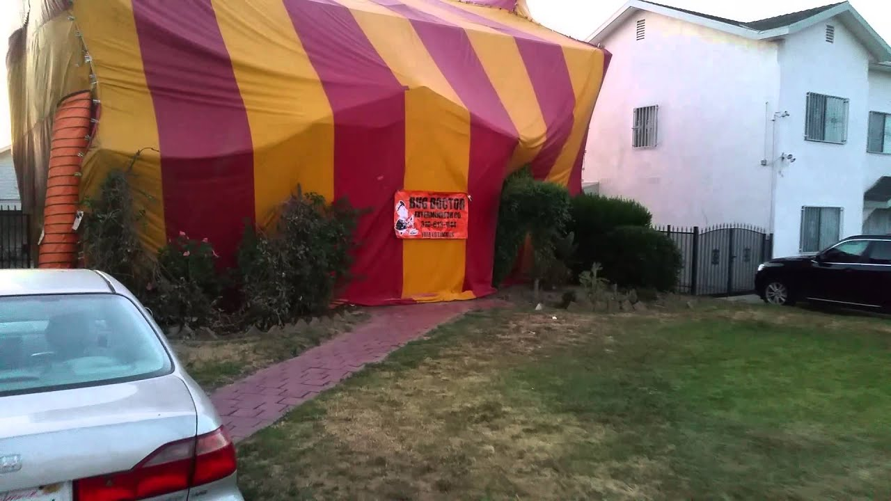 Pest control house tenting tent fumigation for bed bugs for Tent a house