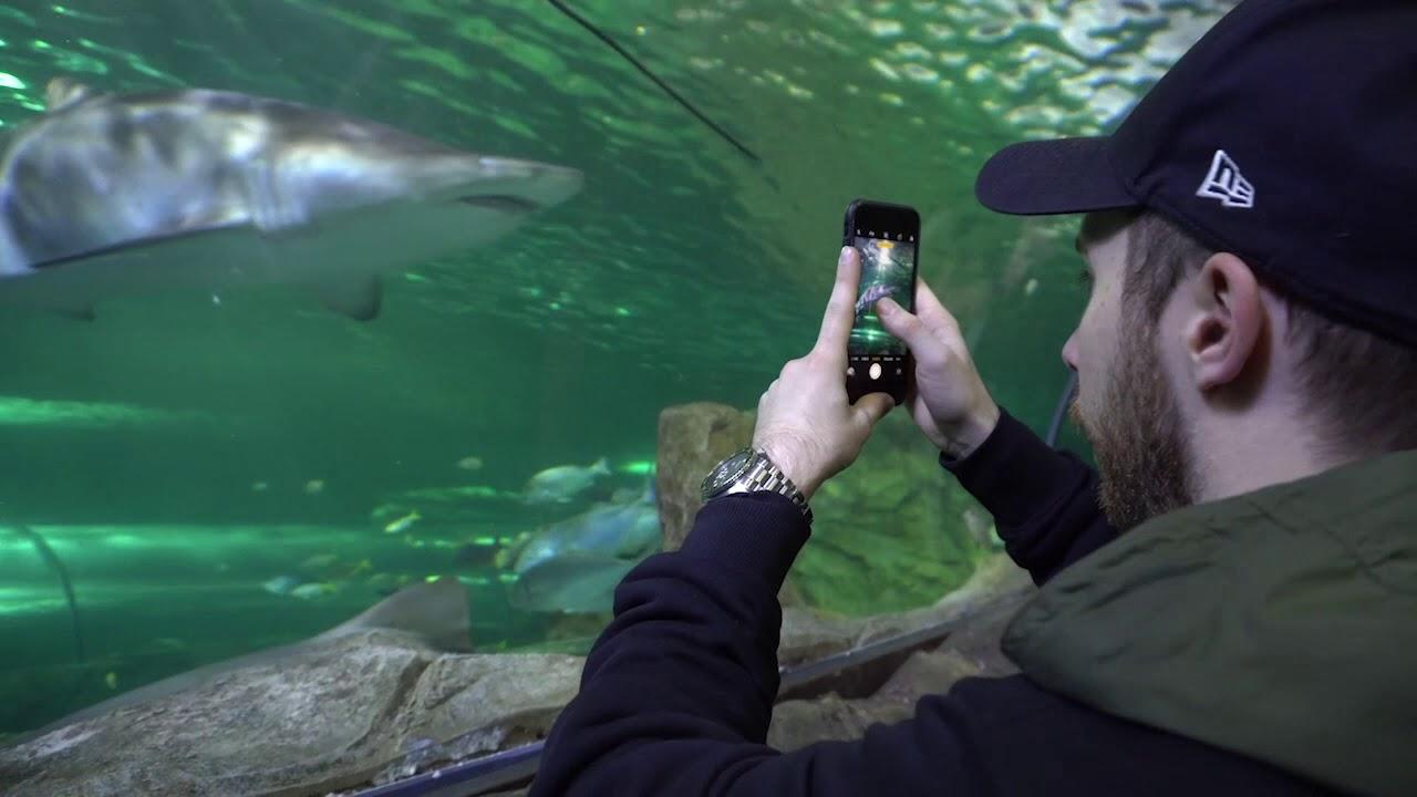 Go Fish - Sydney Aquarium Interactive Experience