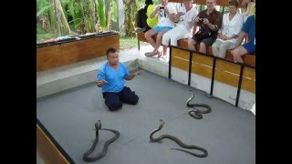 ►Тайское шоу со змеями. Заклинатель змей и сиамские кобры. Змеиная ферма. Таиланд.