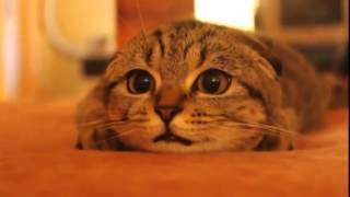 Кот смотрит Ужастики!