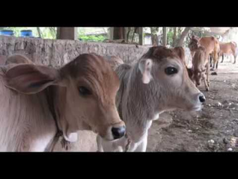 Who is making millions in India from Beef export