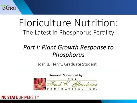 Phosphorus Fertility Part 1: Growth Control of Greenhouse Crops