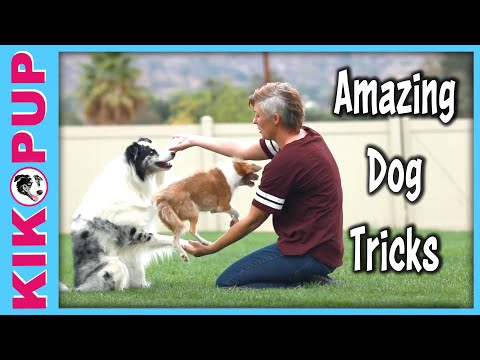 Amazing Double Dog Tricks
