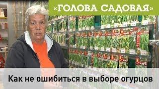 Голова садовая - Как не ошибиться в выборе огурцов