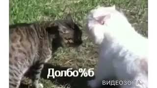 Коты гопники