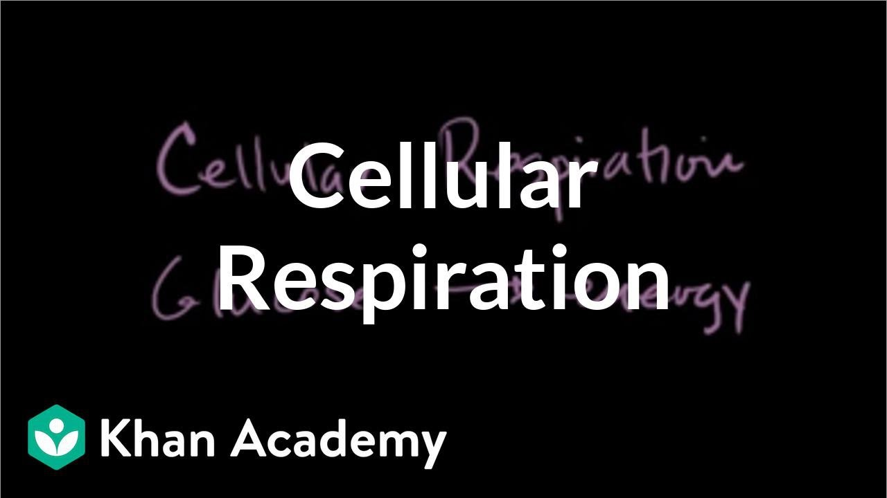 what are two reactants needed for cellular respiration