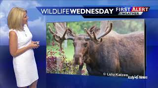 Evening Forecast for August 15
