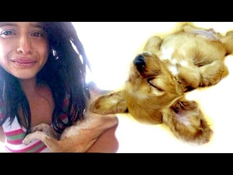 Girl Attacks Her Dog Because 1 Direction Didn't Follow Her On Twitter PRANK