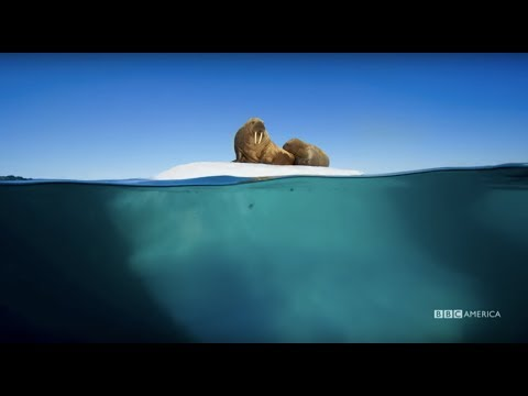 Planet Earth: Blue Planet II  Radiohead & Hans Zimmer  ocean bloom  BBC America