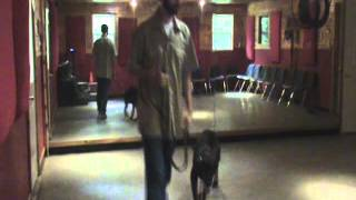 Kiefer - Blue Collar K9 Training Center - Basic Obedience Training