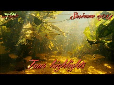 Suriname Highlights 2014