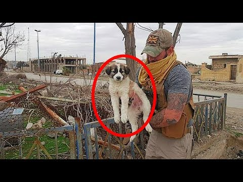 British soldier reunited with dog he pulled alive from rubble in Syria