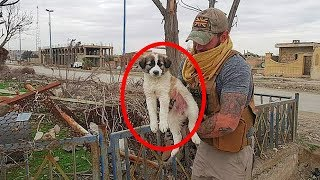 soldier-in-syria-uncovers-a-poor-creature-in-the-rubble-that-soon-gives-him-a-whole-new-mission