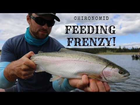 Tunkwa Lake Rainbow Trout (Chironomid Fishing)