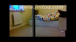 Naughtiest Cat Ever! Pulls covers off of owner to wake him up!