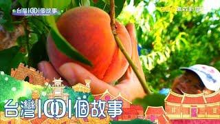 六年級果農兄弟檔 遠征加州晉升水蜜桃大王 part3 台灣1001個故事