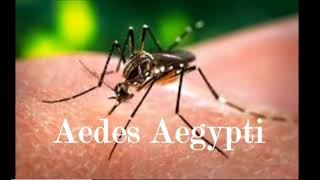 Ventura County Aedes Mosquito! Invasion! Sept 1, 2018