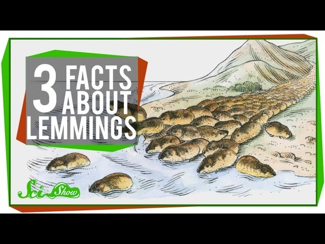 3 Facts About Lemmings