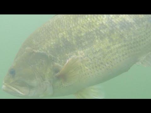 Lake Champlain Bass Fishing.