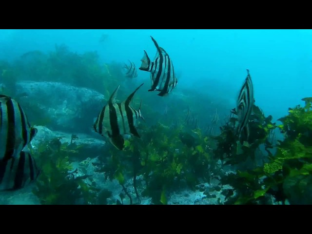 OzDive in Australia - Diving from Clovelly to Gordon Bay (2015)