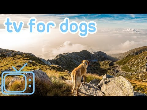 Chill Your Dog Out TV! Deep Relaxation and Entertainment Tv for Dogs!